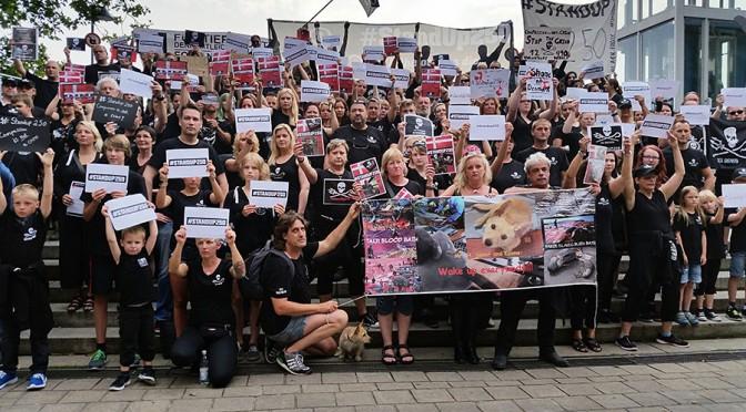 Proteste gegen das Abschlachten der Wale auf den Färöer Inseln