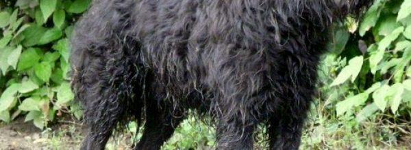 Hund vermisst, 26632 Lübbertsfehn