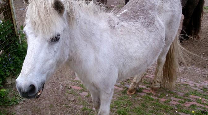 Vier Pferde suchen ein Zuhause