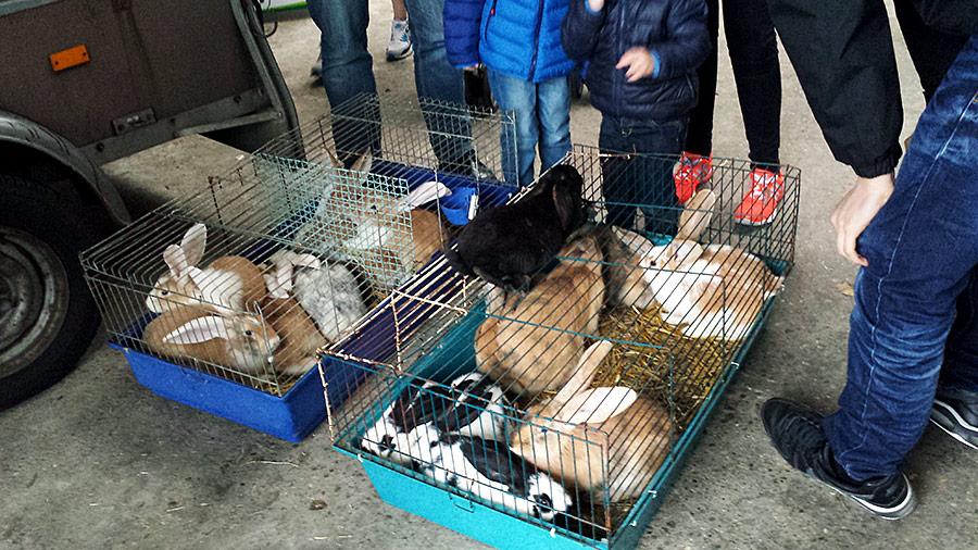 Während des Aufbaus nutzte dieser Händler einen kleinen Verkaufstrick und setzte das völlig verängstigte Kaninchen auf den Käfig, so dass es von allen Seiten gestreichelt werden konnte. Auf Nachfrage, warum das Kaninchen auf dem Käfig sitzt, packte er es sofort zurück in den Käfig ...
