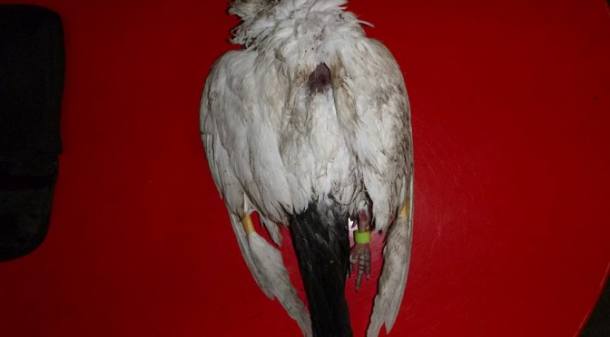 Taube brutal getötet!