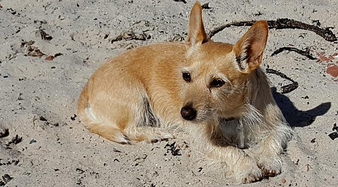 Hundesitter in Weener gesucht