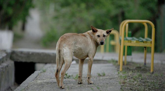 Fußball-WM in Russland: Tierschützer befürchten Tötung von Straßenhunden