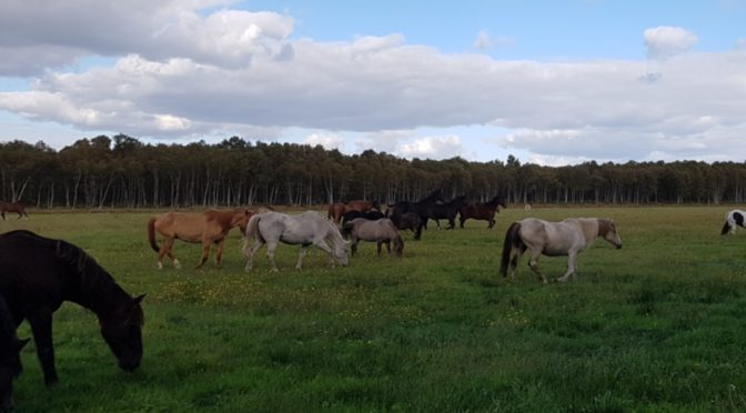 Almabtrieb auf dem Gnadenhof Pferdeoase Ovelgönne