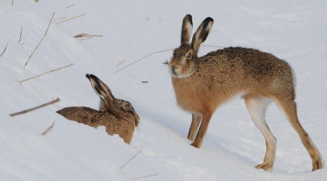 Durch die Lappen gegangen – welcher Jäger kennt noch deren Bedeutung?