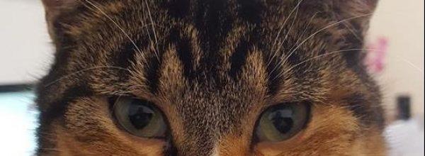 Katze Mina wird in Moormerland vermisst