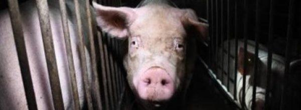 Deutscher Tierschutzbund droht Klöckner mit Strafanzeige