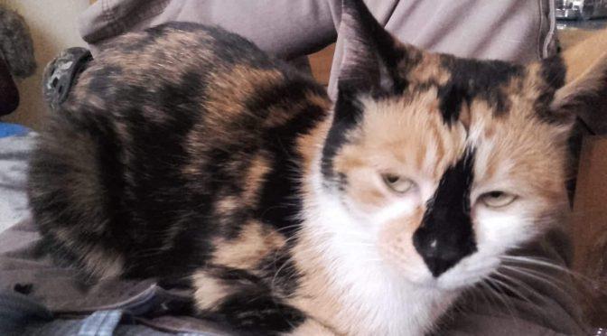 Die Katzen sind nun im Tierheim Jübberde!