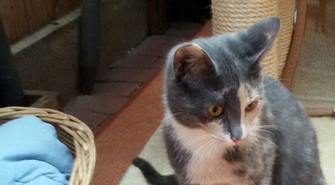 Katze Nelly ist vermittelt!