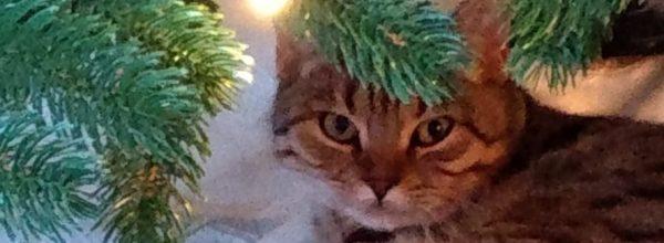 Katze Ivy wird in Leer Heisfelde vermisst!