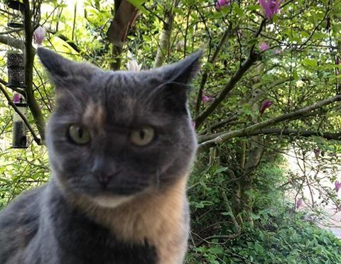 Katze in Leer/Loga vermisst!